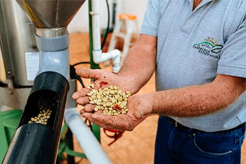 Coffee processing at La Candelilla