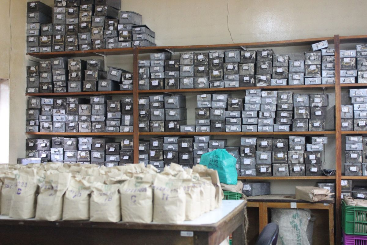 Coffee sorting and packaging in Gathaithi